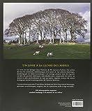 Image de Légendes d'arbres. 90 histoires illustrées