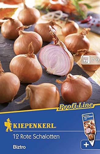 Kiepenkerl Pflanzschalotte 'Biztro'   tolle Qualität   kann eingelegt werden   12 Zwiebeln