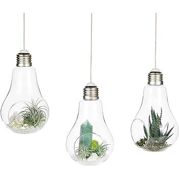 f/ür Zuhause Vase zum Aufh/ängen von Fablcrew f/ür Sukkulenten und Luftpflanzen transparentes Glas B/üro oder Hochzeit. Gl/ühbirnenform