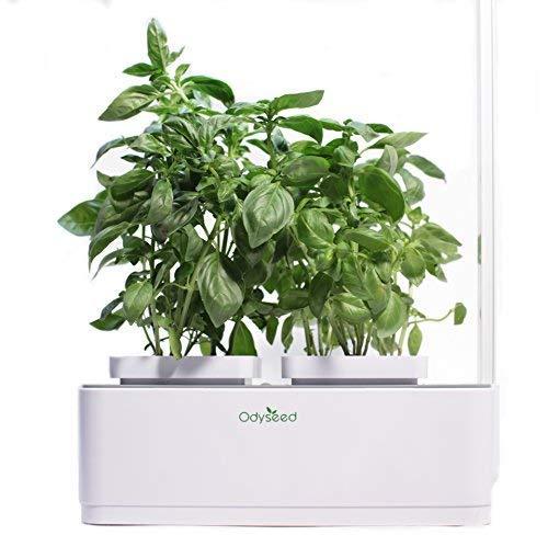 Odyseed Eden - Hausgarten - Ziehen Sie Ihre eigenen aromatischen Kräuter zuhause - Keine Kapseln - Substrat & Samen bereits enthalten (Zitronen-Basilikum & Zimt-Basilikum)