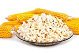 Semillas de palomitas de maíz - Zea masy ssp.everta
