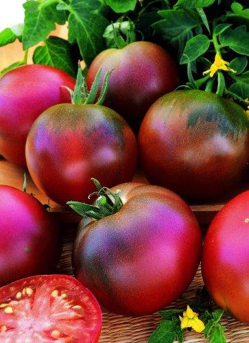 Just Seed Gemüse Tomate Black Russian 50 Samen Wirtschaft Pack