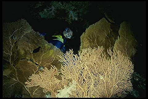 156035 Scuba Diver In Cave With Pacific Sea Fans A4 Photo Poster Print 10x8