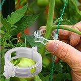 100pcs Fruit Légume Greffage Clips Pince des Plantes à Fleurs de Jardin Semis Outils Fruits Légumes De Vigne Jardinage Greffer Plante