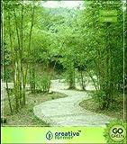 Pinkdose solides Bambus Samen für Garten Bambus Samen Seed