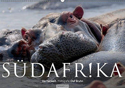 Südafrika - Die Tierwelt (Wandkalender 2019 DIN A2 quer): 12 wunderschöne Tieraufnahmen...