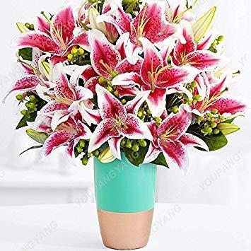 100 / sac blanc péruvien Lily Graines Lily Mix Pérou (Alstroemeria) Graines de fleurs vivaces pure Bonsai les plantes pour jardin Rouge
