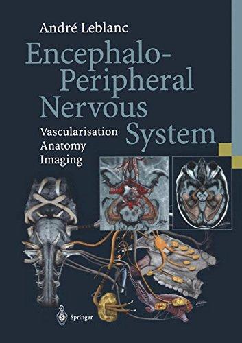 Encephalo-Peripheral Nervous System: Vascularisation Anatomy Imaging