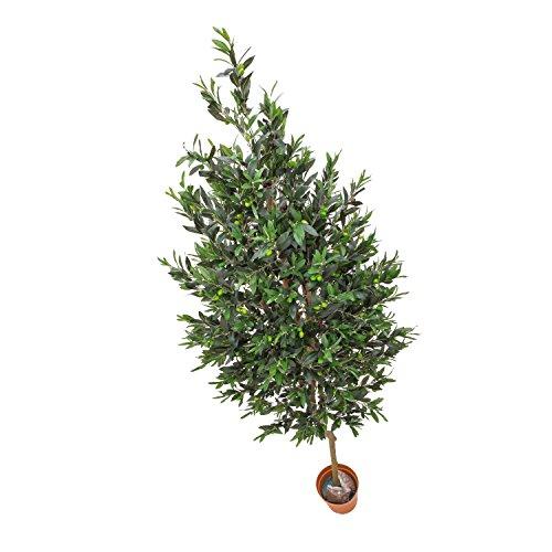 artplants Künstlicher Olivenbaum mit 3970 Blättern, 370 Oliven, Naturstamm, 250 cm – Deko Baum/Künstlicher Baum