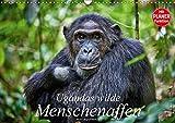 Ugandas wilde Menschenaffen (Wandkalender 2018 DIN A3 quer): Fotografien wilder Schimpansen und Berggorillas (Geburtstagskalender, 14 Seiten ) ... [Kalender] [Apr 01, 2017] Ritterbach, Jürgen