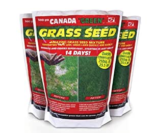 Canada Green Grass Seed: 500g. 3 x 500g Bags. Bulk Offer Coverage up to 70.5 sq metres