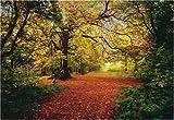 Fototapete Motivtapete Bildtapete Autumn Forrest Herbst Herbstwald Waldweg Wald Bäume Laub Laubwald - Lieferung inkl. Tapetenleim - Wall Mural 8-Teilig - Größe 270 x 388 cm