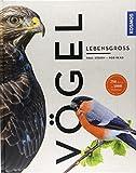 Vögel lebensgroß (Großformat) -