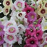 Rare graines de roses trémières japonais 100% vraies graines de 15 couleurs différentes de fleurs en pot bonsaï bricolage maison jardin 50PCS Althaea rosea...