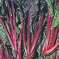 PlenTree Semillas acelgas, cardo suizo, rojo rubí, de la herencia, Orgánica 25 + semillas, no gmo