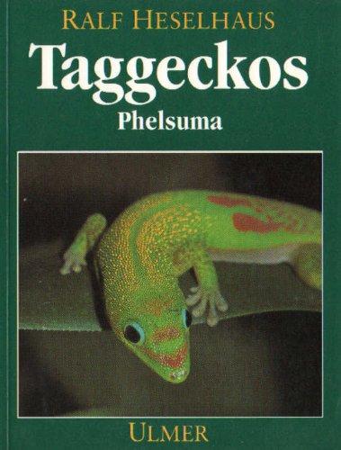 Taggeckos - Taggecko