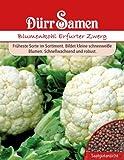 Blumenkohl Erfurter Zwerg
