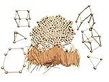 Steck Baukasten Geometrisches Spiel – Formen darstellen – Gegenstände nachbauen – für Schule Mathematik & zu Hause – Grenzenlos Kreativ für Kinder & Erwachsene –1.000 Stück Holz Stäbe & 280 Kugeln