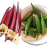 Okra Samen Mix Rot & Grün -Abelmoschus esculentus- ***Kalorienarme*** Orientgemüse