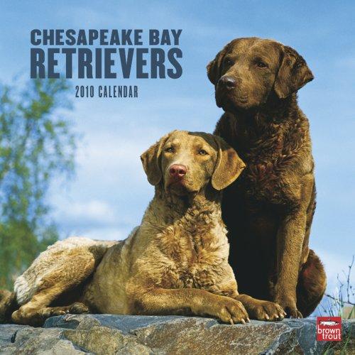 Chesapeake Bay Retrievers 2010 -
