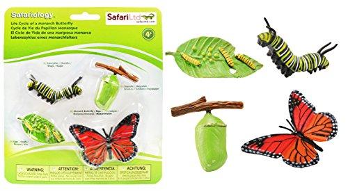 Safari Ciclo de Vida de un Monarch falters