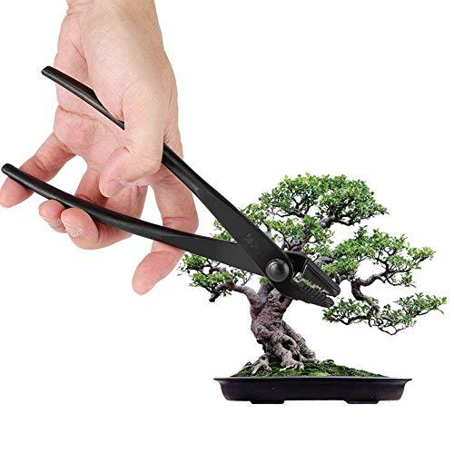 Bonsai Zange Profi Qualität Bonsaiwerkzeug Konkavzange Bonsaizubehör Werkzeug Aus Stahllegierung, Schwarz 20CM