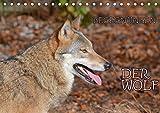 Begegnungen DER WOLF (Tischkalender 2019 DIN A5 quer): Der Wolf - fantastische Bilder vom Isegrim. (Monatskalender, 14 Seiten ) (CALVENDO Tiere)