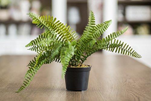 Kunstpflanzen Boston Farn Fake Plug Gras Pflanzen grenery für Indoor Outdoor Home Hochzeit Tisch Grave Dekoration von Stadt zu Cottage (Fake Indoor-gras)