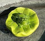 Schwimmfrosch auf Blatt, Keramik, Durchmesser ca. 12 cm, GD104