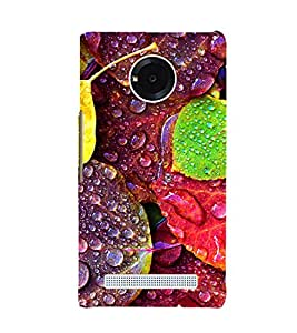 Fuson Premium Back Case Cover Dew drops on leaves With grey Background Degined For YU Yuphoria::Micromax Yuphoria YU5010