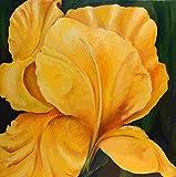 Bild Blume Iris Malerei Kunst Original Ölmalerei Gemälde 60x60 cm