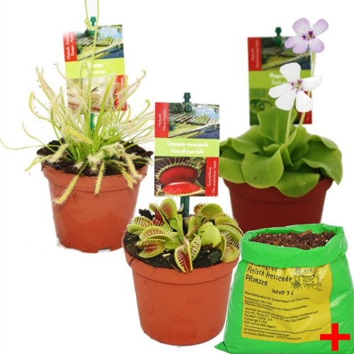 Starter Set Fleischfressende Pflanzen - 3 Pflanzen + Erde - Karnivorenerde