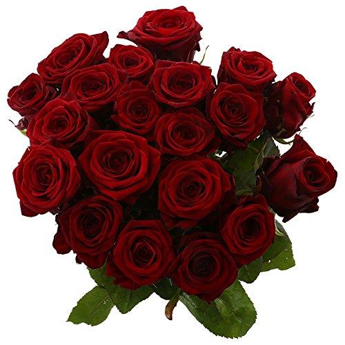 Choice of Green - 1 bouquet de Rose Naomi Red Large - 20 tiges - Hauteur ↕ 60 cm - Qualité de Hollande - Frais du cultivateur