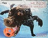 Hunde unter Wasser 2020: Wandkalender - Seth Casteel