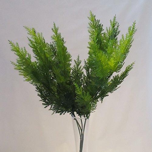 bush-2-tonalit-colore-verde-cedro