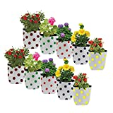 #9: TrustBasket Set of 10 Premium colourfull Dotted Grow Bags (20 * 20 * 35 cms)