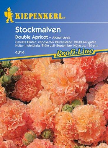 Stockrose cm Alcea