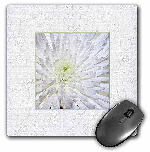 Beverly Turner Flora Design and Photography - Chrysanthemum in Textured White Frame - MousePad (mp_179266_1)
