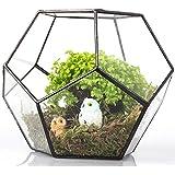 JINCAO - Terrario a forma di pentagono, in vetro, geometrico, aperto, centrotavola, vaso per piante grasse, felce e muschio