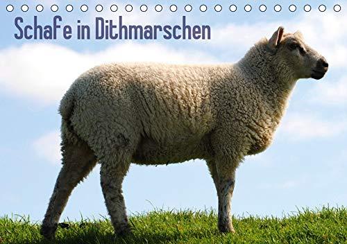 Schafe in Dithmarschen (Tischkalender 2020 DIN A5 quer)