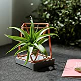 Geometría Flower Pot, Air Pineapple Rose Gold Cement Hierro Arte Flower Pot Base Creatividad Sala