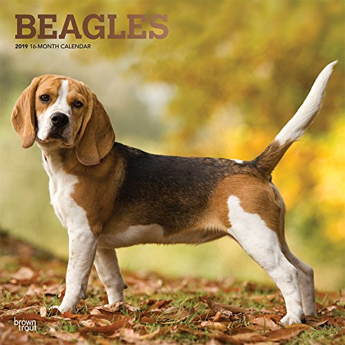 Beagles 2019 Calendar par Inc Browntrout Publishers