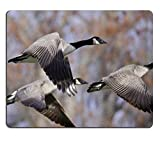 MSD Natural Rubber Gaming Mousepad IMAGE ID: 35001698 Canada Geese Flying Across the Autumn Woods