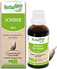HerbalGem | Sorbier Bio | Macérats-Mères de Gemmothérapie Concentrée | 30 ml