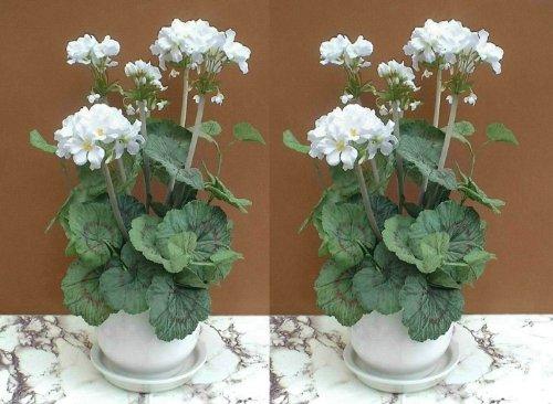 2 x Blanco Geranio Plantas (46cm) - Flores Artificiales SIN MACETAS
