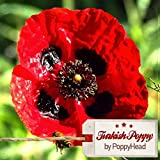 "Papaver Somniferum ""Turkish Poppy"" (High alkaloid & unwashed) (500)"