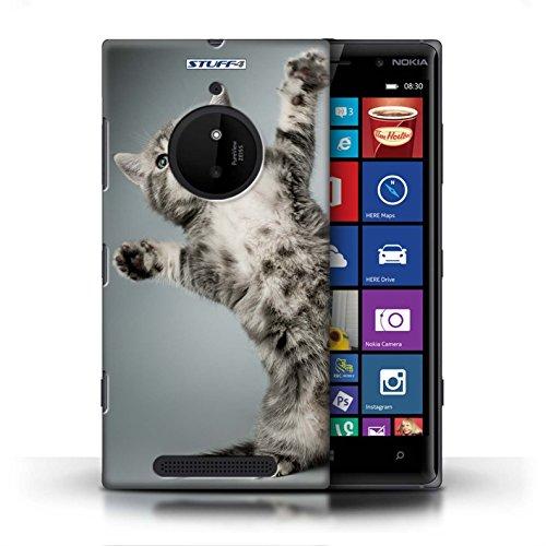 Kobalt® Imprimé Etui / Coque pour Nokia Lumia 830 / Blanc et moelleux conception / Série Chatons mignons High five