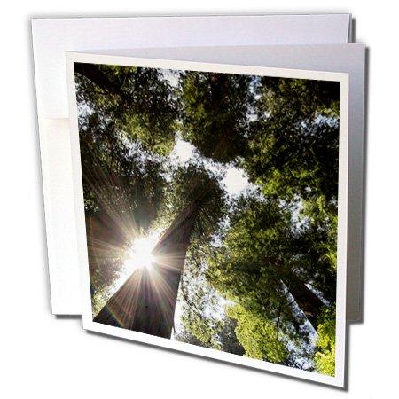 3dRose Redwoods, HumbolDT Redwoods State Park, CA Grußkarten, 15,2 x 15,2 cm, 12 Stück (gc_207318_2) -