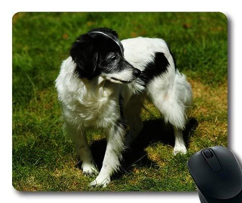 Individuelle Mousepad, süß, Hund, Schwarz - weiß - Schwarze süße Haustiere Männer Pelz, der Hund Gaming Mouse Pad (Süße Männer Schwarze)