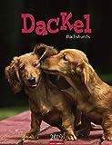 Dackel - Kalender 2019